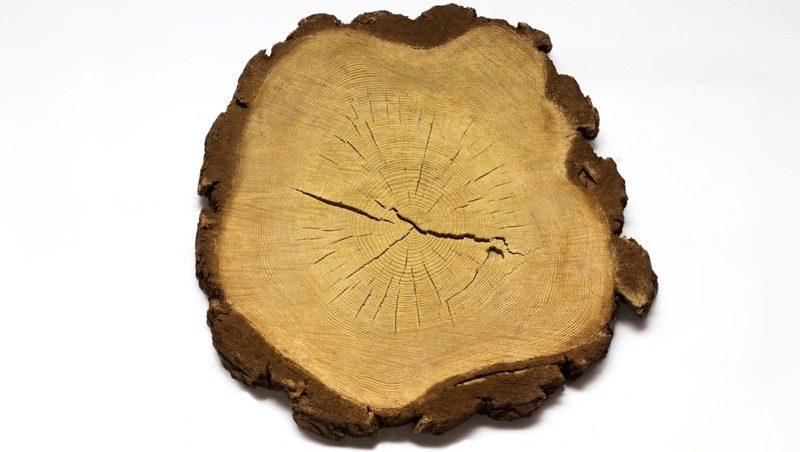 Спил дерева «большой с корой»